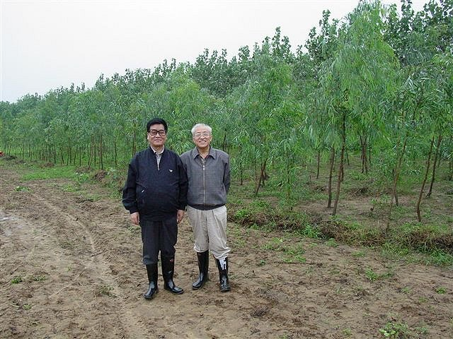 Eucalypts growing in Henan Province, China, since June 2002